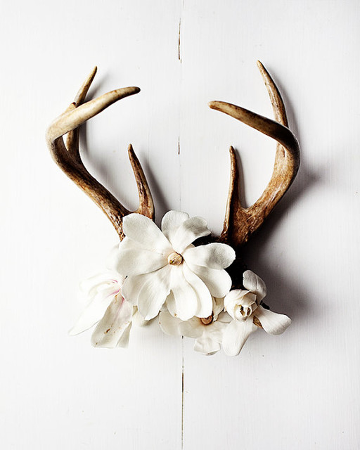 Antler No. 6986 Large Print by Kari Herer Photography eclectic-artwork