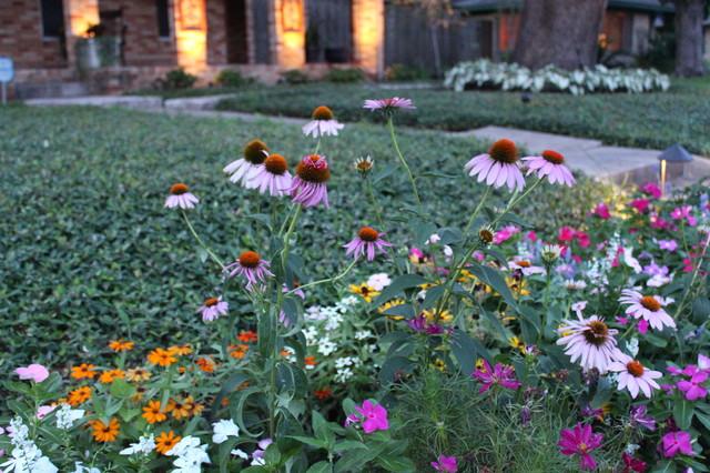 Summer Flowers traditional-landscape