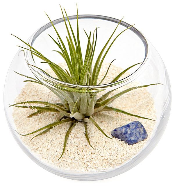 Luludi Living Frames Zodiac Sagittarius contemporary-indoor-pots-and-planters
