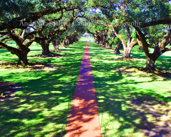 Oak Alley Plantation, Photography as Wall Art-Available in Multiple Sizes - Andri Magdalena Cauldwell