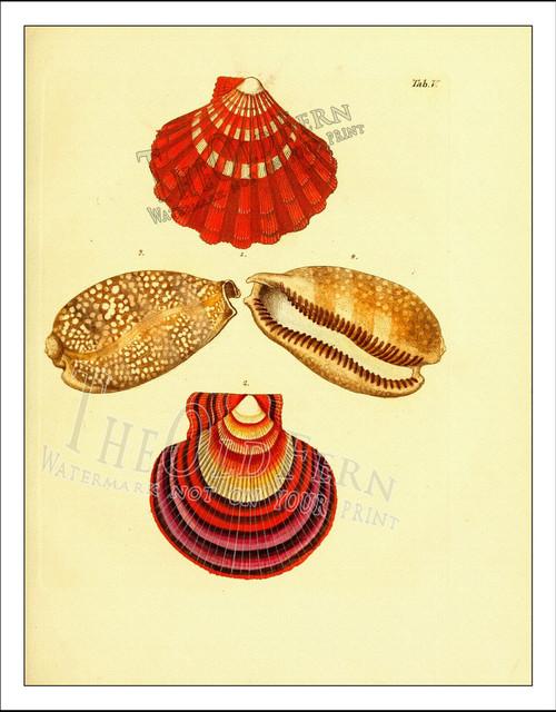 Seashell prints 1 traditional-artwork