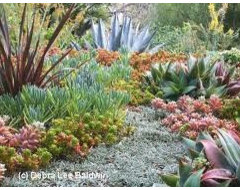 Landscaping with succulents plants