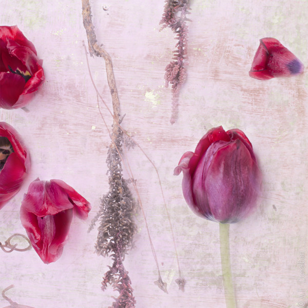 Tulips in red and pink by DUEALBERI contemporary-artwork