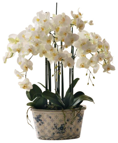 Phalaenopsis Orchid In Ceramic Pot Traditional