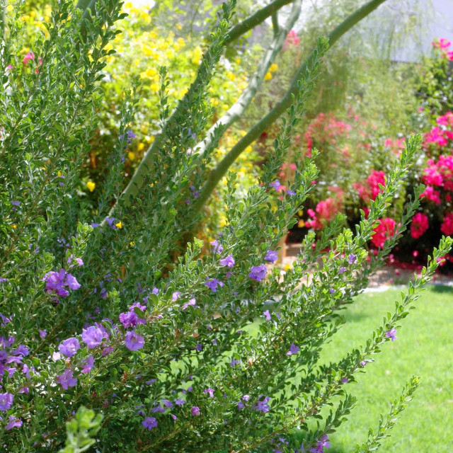Create Beautiful Bouquets Using Flowering Plants From Your Own Garden