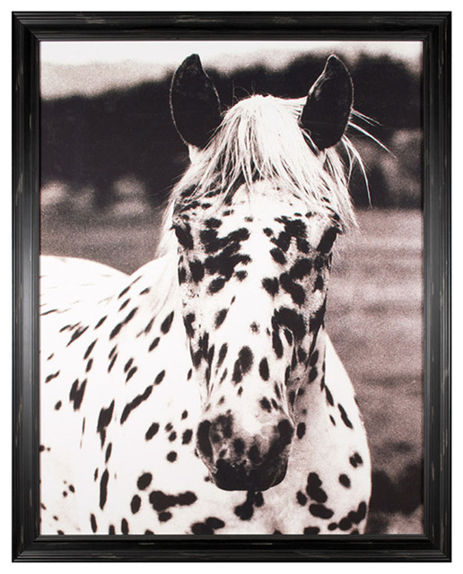 Hyden Rustic Lodge Modern Spotted Horse Photo Wall Art - Framed rustic-prints-and-posters
