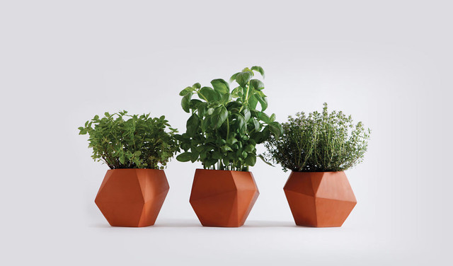 modern plants by Theo