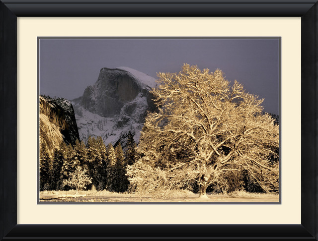 Half Dome and Elm Framed Print by William Neill traditional-prints-and-posters