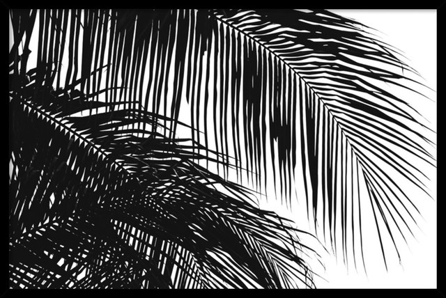 Palms 3 Framed Print by Jamie Kingham traditional-prints-and-posters