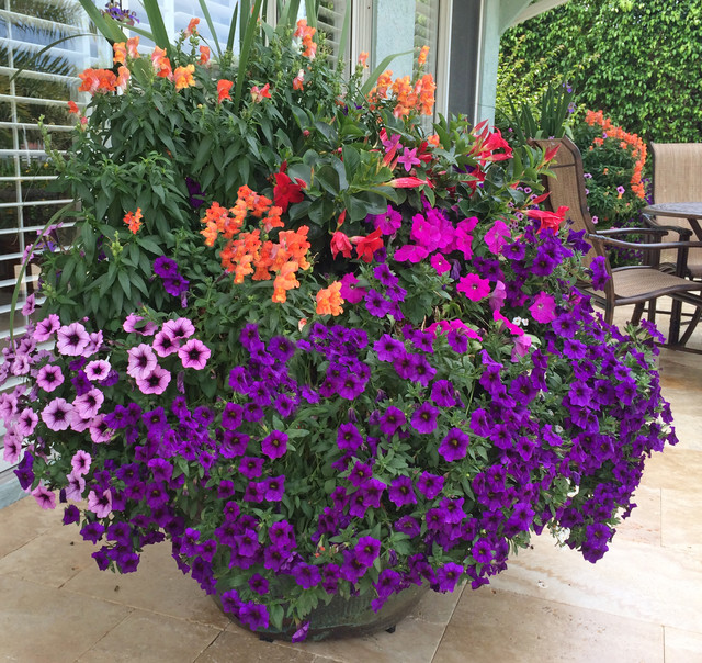 Allen backyard transformation with jumbo pots brimming with petunias ...