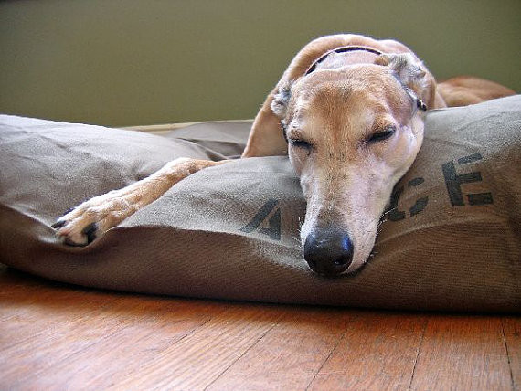 Dog Bed Duvet Cover by Bow Wow Beds modern-pet-beds