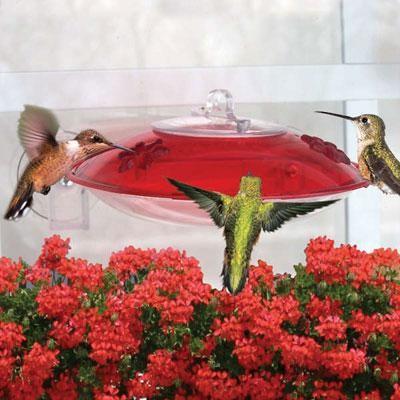 2 Flower Ports Hummingbird Feeder modern-bird-feeders