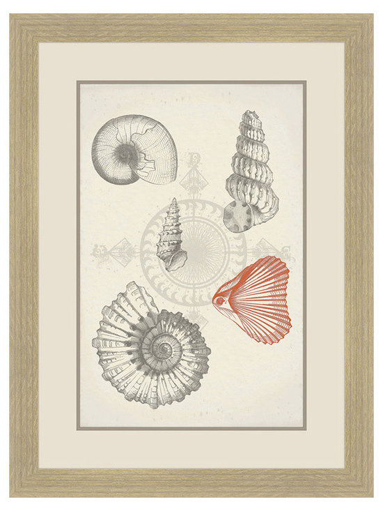 Big Fish Fossil Shells Wall Art