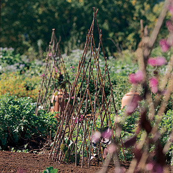 Willow Plant Pyramids traditional-garden-sculptures