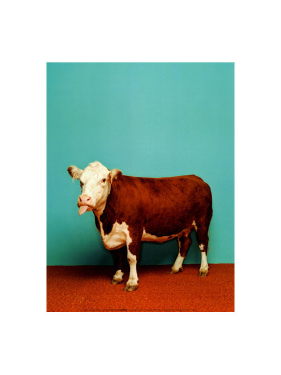"""""""Cow"""" Poster by Catherine Ledner -"""