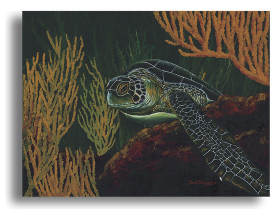 "Ready2HangArt - Ready2hangart David Dunleavy 'Black Sea Turtle' Canvas Wall Art, 16"" X 20"" - This beautiful canvas wall art brought to you by Ready2hangart from renowned artist David Dunleavy exemplifies his passion for marine life while translating it to detailed underwater paintings.  It is fully finished, arriving ready to hang on the wall of your choice."