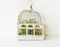 White Wash Bird Cage Air Plant Garden by Earth Sea Warrior eclectic plants