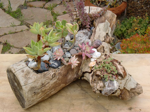 Eco - Driftwood Planters eclectic-indoor-pots-and-planters