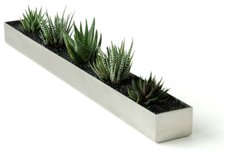 Gus Modern Fruit Trough - Modern - Indoor Pots And Planters - by Design Public