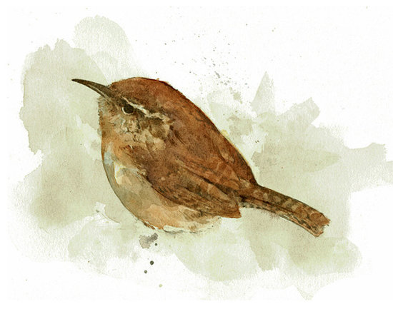 Wren painting - Carolina Wren Print. Painted in watercolor.