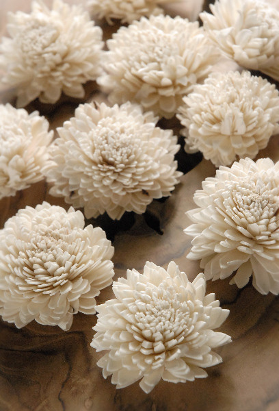 Sola Shell Flowers modern accessories and decor