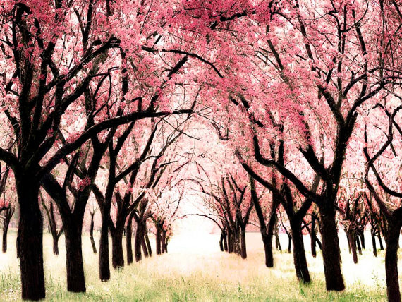 Cherry Blossom Orchard, Tree Art Nursery Print, Wonderland by Raceytay modern nursery decor