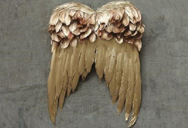 Feather Angel Wings Wall Decor : Golden feather angel wings farmhouse home decor