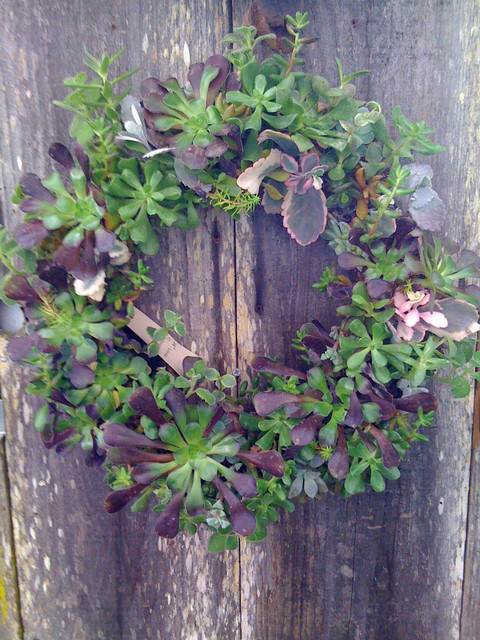 Succulent wreaths and forms contemporary plants by for Indoor decorative live plants