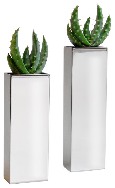 2 chrome pillar vases with aloe flames modern plants for Indoor decorative live plants