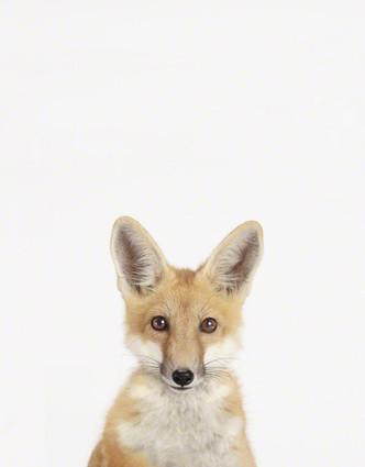 Baby Fox Close-Up contemporary-nursery-decor