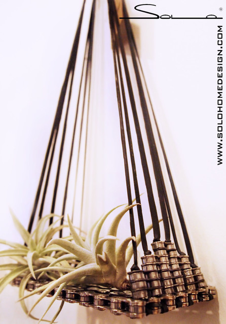 Air Plant Hangers - Industrial - Indoor Pots And Planters - chicago ...