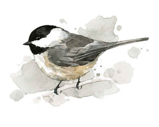 Watercolors / Birds - Archival print of a Chickadee painting. Watercolor by david scheirer.