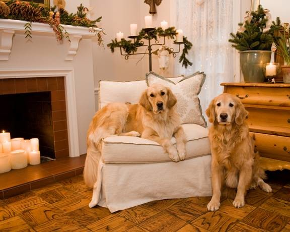 Pet Photo Contest l Quatrine Furniture traditional-chairs
