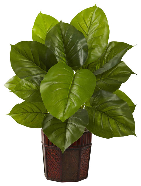 Large leaf philodendron with decorative planter real for Indoor decorative live plants