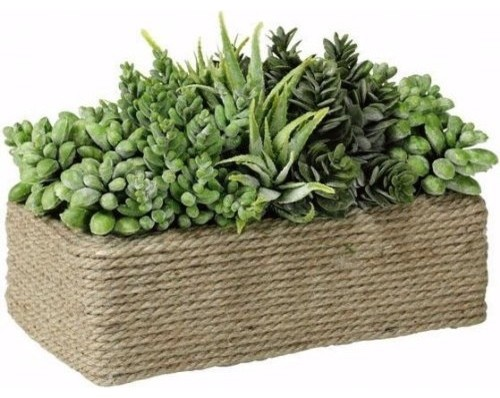 Succulents In Rectangular Wound Rope Pot traditional-plants