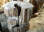 fosil wood tropical-home-decor
