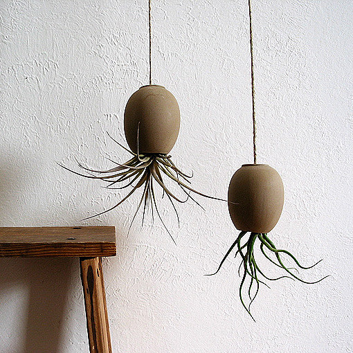 Air Plant Pod modern indoor