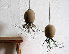 Air Plant Pod modern indoor pots and planters