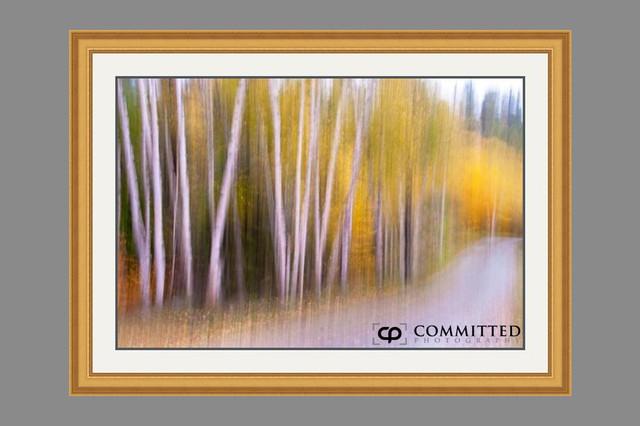 Ghostly Birch Woods by Shelley Ball artwork