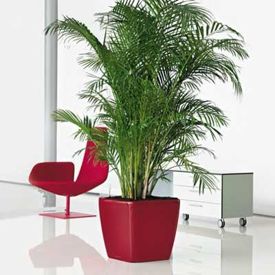 Lechuza planters - Traditional - Indoor Pots And Planters - other metro - by goverhorticulture