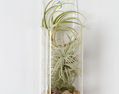 Tillandsia Pocket Square contemporary indoor pots and planters