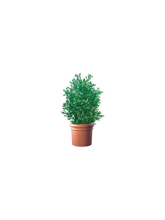 Artificial Outdoor Boxwood Bush - Artificial outdoor boxwood bush is available up to 8' high.