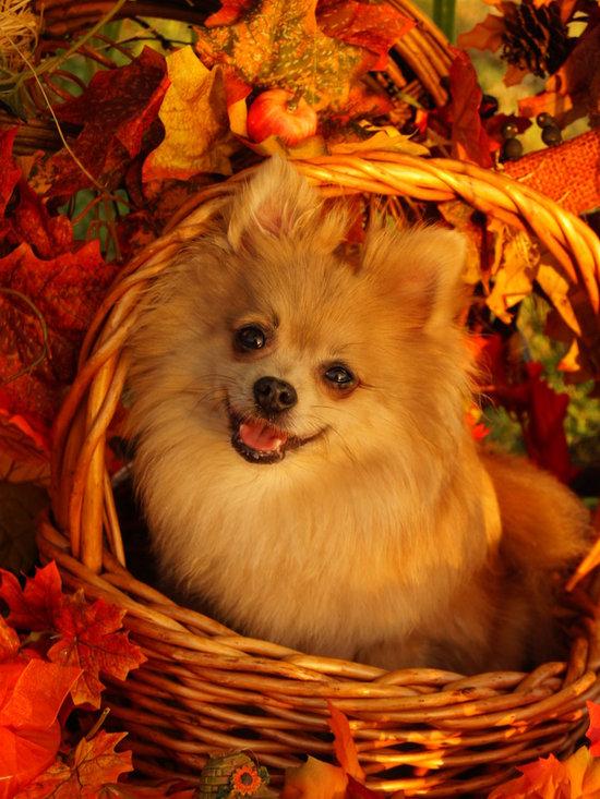 """Fall~ Fabulous Foto's"" - Trudi"