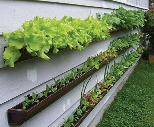 Gutter Veggie Patch Garden contemporary