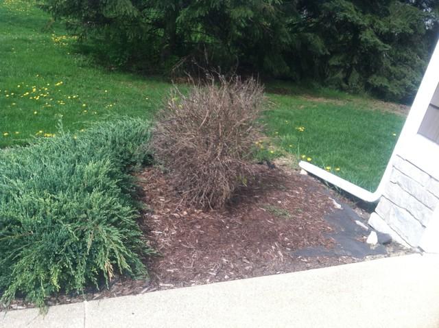 Front yard landscaping traditional-landscape