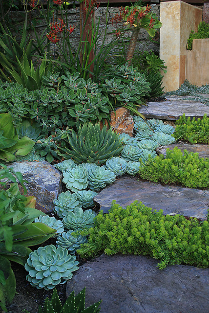 Succulant Garden eclectic