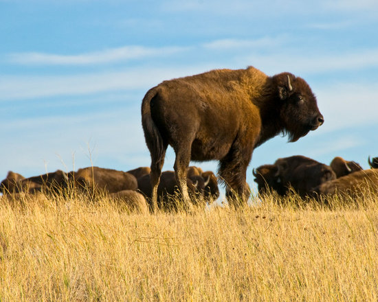 Buffalo Buttes - Copyright Jeanne Apelseth, sunchaser@rap.midco,net