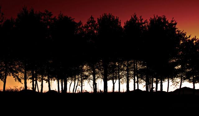 Tree Photography & Art modern-artwork