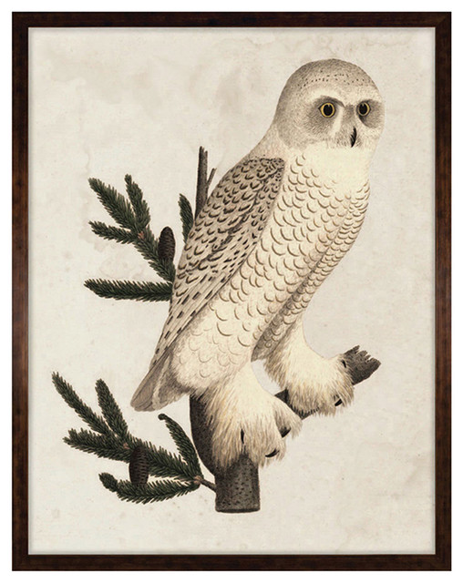 Banzanini 18th Century Rustic Grand Snow Owl Engraving - Framed rustic-prints-and-posters