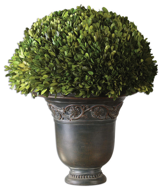 Globe preserved boxwood decorative plant contemporary for Indoor decorative plants